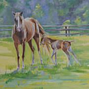 Summer Foal Art Print