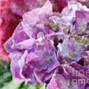Summer Hydrangeas With Painted Effect Art Print