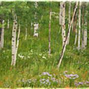 Summer In The Colorado Mountains Art Print