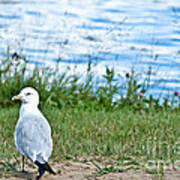 Summer Sea Gull Art Print