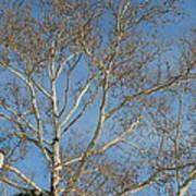 Summer Sky Winter Day Art Print