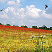 Summer Spectacular - Red Kites Over Poppy Fields Art Print