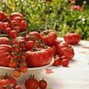 Summer Tomatoes Art Print