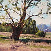 Summer Willow Art Print by Graham Gercken
