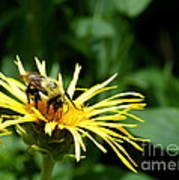 Summertime Bee Art Print