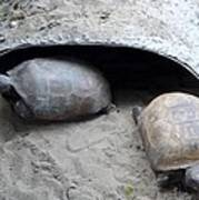 Sun Basking Turtles Art Print