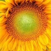 Sun Flower Power Art Print