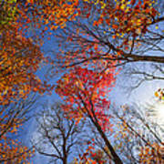 Sun In Fall Forest Canopy  Art Print