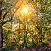 Sun In The Autumn Forest Art Print