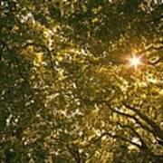 Sun In The Trees Art Print