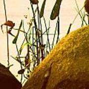 Sun Kissed Grass And Rocks   Art Print