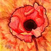 Sun Kissed Poppy Art Print