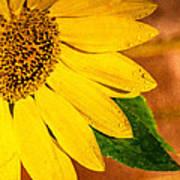 Sun-kissed Sunflower Art Print