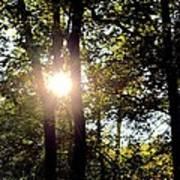 Sun Kissed Trees Art Print