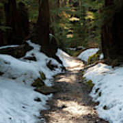 Sun Lit Trail, Olympic National Park Art Print