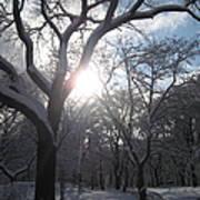 Sun Over The Park Art Print