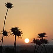 Sun Rise On Bethsaida Art Print