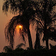 Sun Setting Behind The Queen Palm Covered In Smoke Art Print