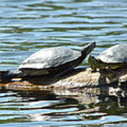 Sun Stretching Turtle And Youngster Art Print