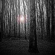 Sun Thru The Trees At Twilight Art Print