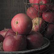 Sun Warmed Apples Still Life Art Print