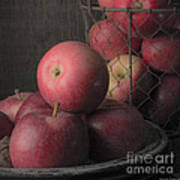 Sun Warmed Apples Still Life Square Art Print