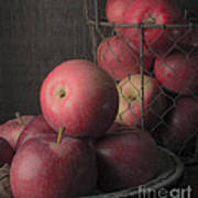 Sun Warmed Apples Still Life Standard Sizes Art Print