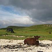 Sunbathing in Scotland Art Print