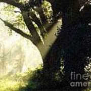 Sunbeam Tree Art Print