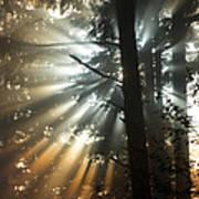 Sunbeams Through Trees Art Print