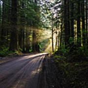 Sunburst At Redwood National Park Art Print