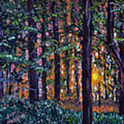Sundown In Woods Art Print
