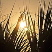 Sundown Through The Grass Art Print