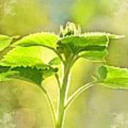 Sundrenched Sunflower - Digital Paint Art Print