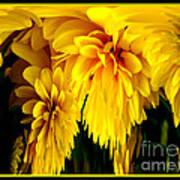 Sunflower Abstract 1 Art Print