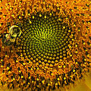 Sunflower An Bumble Art Print by Brittany Perez