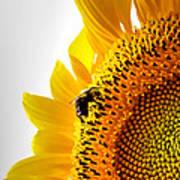 Sunflower And Bee 2 Art Print