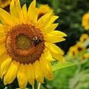 Sunflower And Bee II Art Print