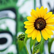 Sunflower And Graffiti  Art Print