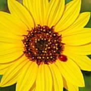 Sunflower And Ladybird Beetle 2am-110490 Art Print