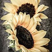 Sunflower Blossoms Art Print