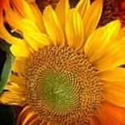 Sunflower Bright Art Print