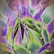 Sunflower Bud Abstract Art Print