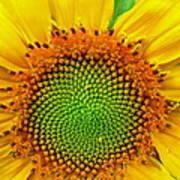 Sunflower Center Art Print