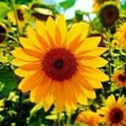 Sunflower Centered Art Print