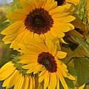 Sunflower Cluster Art Print