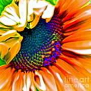 Sunflower Crazed Art Print