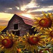 Sunflower Dance Art Print by Debra and Dave Vanderlaan
