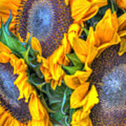 Sunflower Delight Art Print