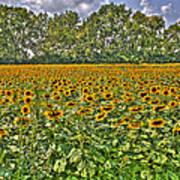 Sunflower Fields Ford World Headquarters Dearborn Mi Art Print